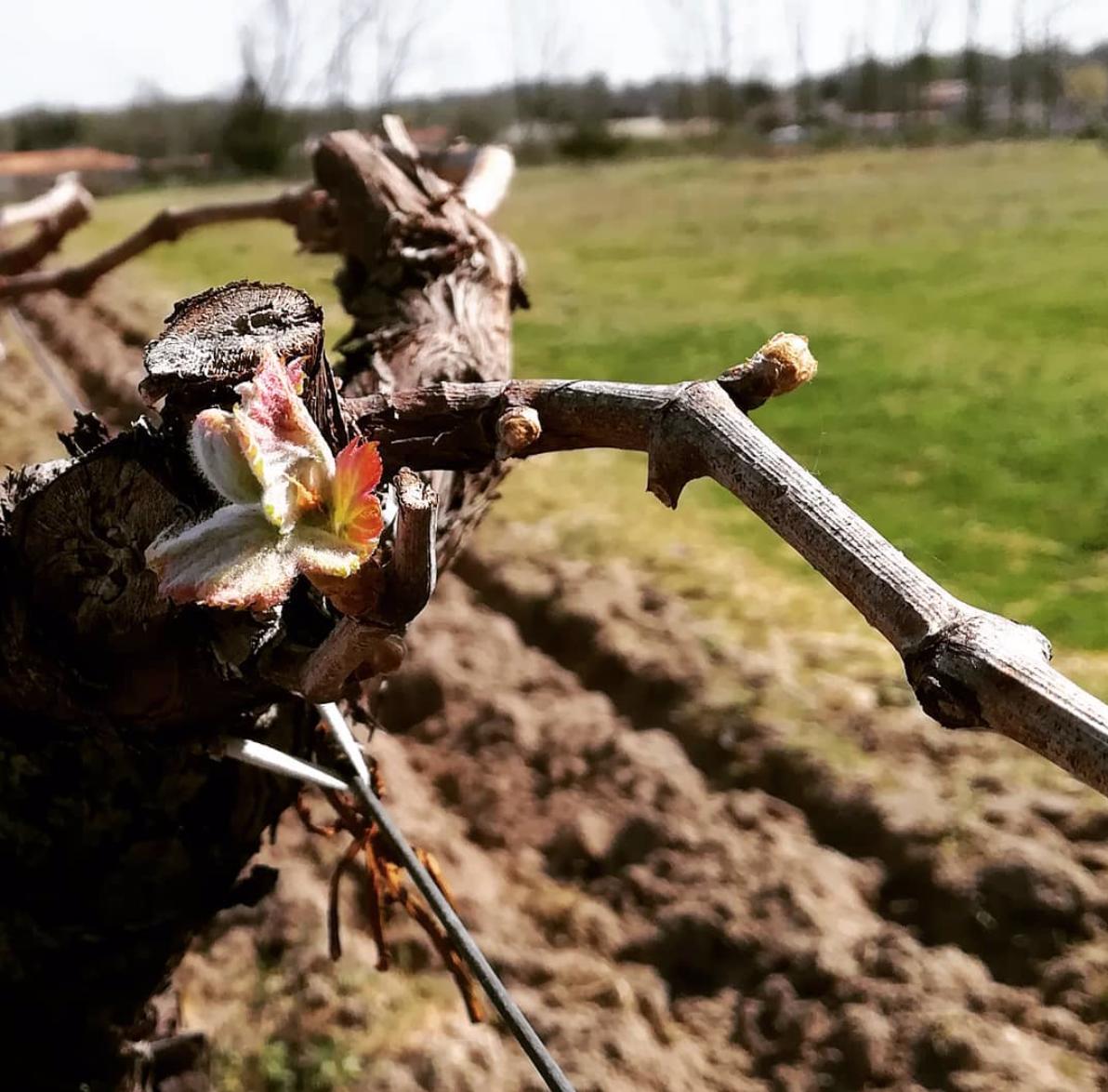 La vie et le travail continu dans les vignes du Médoc